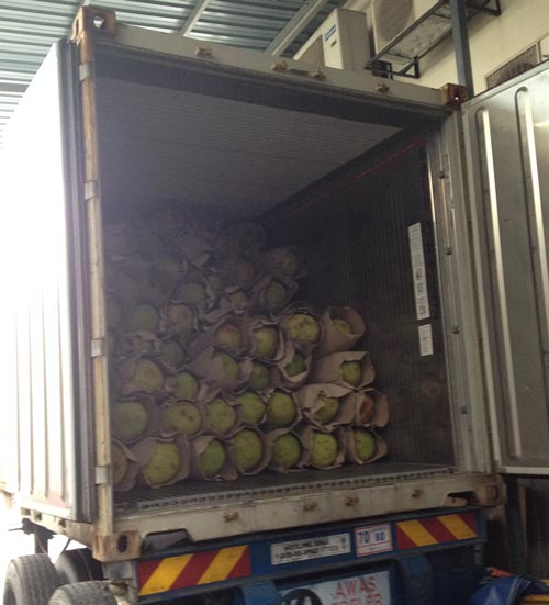 Jackfruit container for Export from Malaysia